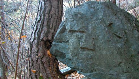 Decreto Foreste: un passo avanti o un passo indietro?