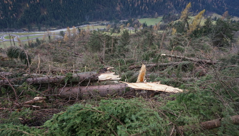 Foreste delle Dolomiti: una proposta