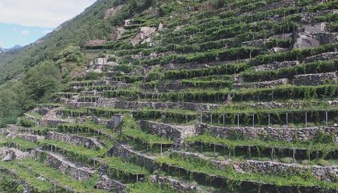 Il vino valdostano: da fonte energetica a prodotto simbolo