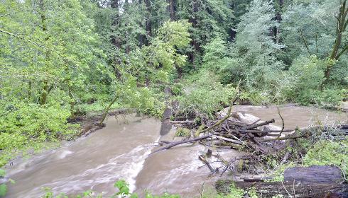 Il bosco che frena le acque