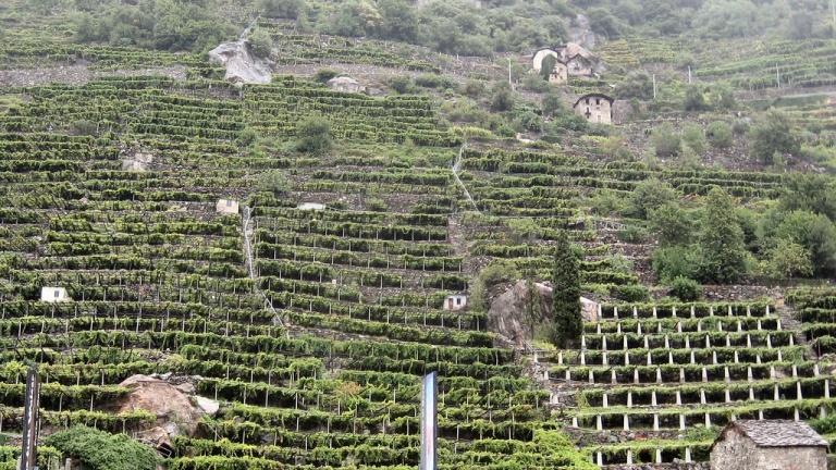 Paesaggi terrazzati: il terzo incontro mondiale tra Piemonte e VdA