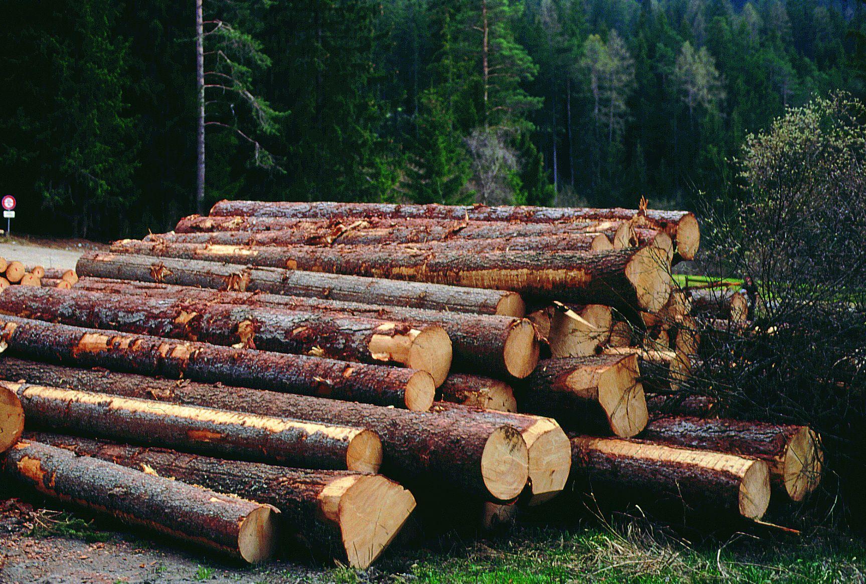 Risultati immagini per ditte di legname sulle alpi
