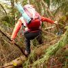 Chi sorveglia il patrimonio forestale?